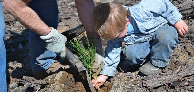 Kid planting tree.